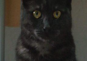 Приложение от новороссийских разработчиков помогло найти потерявшегося кота