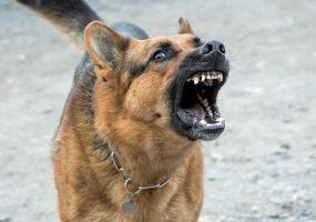 В Новороссийске собака покусала ребенка, возбуждено уголовное дело