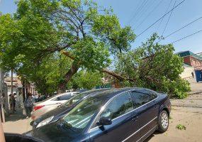 В Краснодаре на трамвайные пути рухнуло дерево