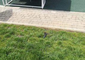 В Краснодаре задержали трех вандалов, которые голые бегали по скверу в ЮМР