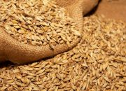 На Кубани аграрии планируют заготовить около 2,5 млн тонн кормов