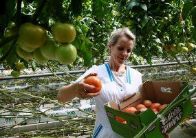 На Кубани с начала года собрали 35 тыс. тонн овощей