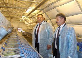 В Щербиновском районе запустили кролиководческую ферму за 1,8 млн рублей