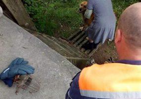 В Новороссийске спасатели помогли пенсионерам поднять собаку из оврага