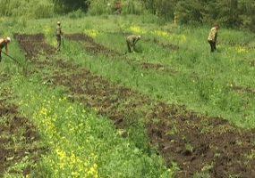 До 2022 года на Кубани восстановят больше 200 га леса
