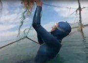 В Сочи спасли дельфина, застрявшего в рыболовных сетях