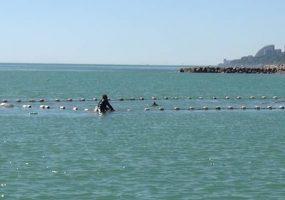 В Сочи волонтеры спасли дельфина из рыболовных сетей