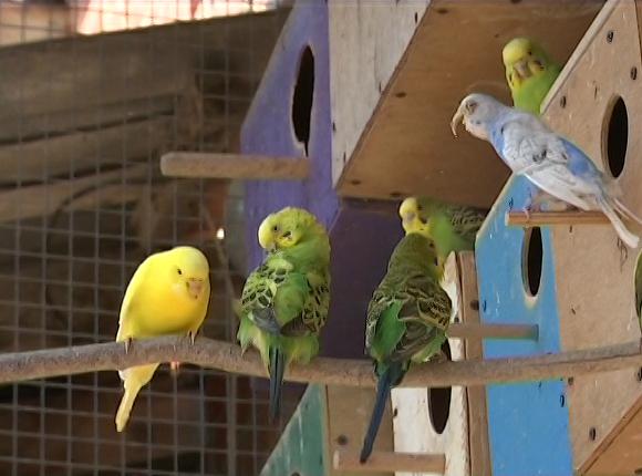 В Северском районе казачий атаман построил птичий питомник