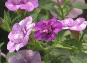 На Кубани осужденные вырастили цветы для муниципальных клумб