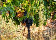 На Кубани обанкротилась винодельня с полувековой историей