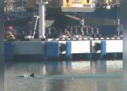 Дельфин заплыл в промзону морского порта Новороссийска