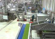 Кубанские заводы планируют выпустить 200 млн консервов с зеленым горошком