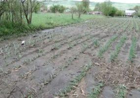 На Кубани град побил посевы на территории в 2 тыс. га