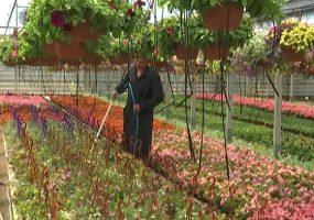 В одной из колоний Кубани арестантов научили выращивать декоративные цветы