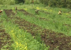 В Выселковском районе проверили 15 га насаждений черешчатого дуба