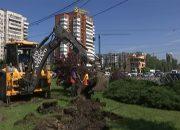 В Краснодаре на Старокубанской из-за ремонта дороги пересадят 120 растений