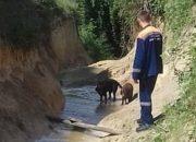 Новороссийские спасатели вытащили двух собак из русла реки