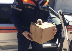 Новороссийские спасатели нашли «приемных родителей» для птенца чайки