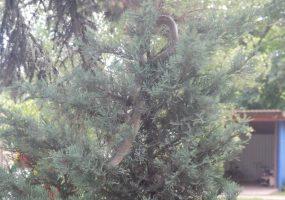 В Крымском районе спасатели сняли с елки в детском саду змею