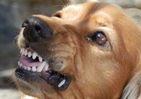 В Новороссийске стая собак напала на ребенка