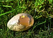 В Тихорецком районе вора поймали по следам от разбитых яиц
