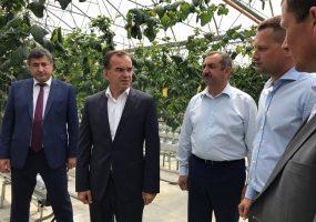 Кондратьев посетил тепличный комплекс в Северском районе