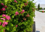 Парк «Краснодар» пригласил в гости любителей боярышника