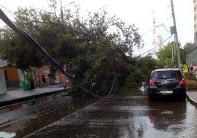 В Краснодаре во время ливня упало шесть деревьев