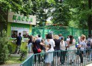 В Краснодаре открыли выдачу льготных карт для катания на аттракционах в парках