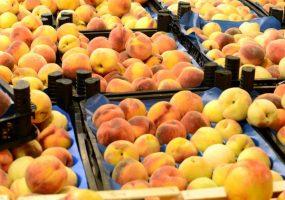 В Туапсе задержали партию зараженных трипсом персиков из Турции