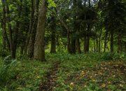 На Кубани сельский глава разрешил лесорубам спилить деревья на 30 млн рублей