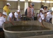 На Кубани прошел экологический фестиваль «Выпусти рыбку»