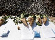 На Кубани выделят 6,7 млн рублей на покупку отечественных семян сахарной свеклы