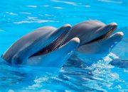 В Туапсе 20 волонтеров научили спасать дельфинов