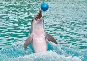 Сочинский дельфинарий оштрафовали на 37 млн рублей за отлов косаток