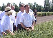 Кубань взяла курс на повышение качества зерна