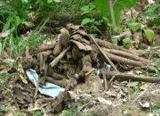 В Апшеронском районе обнаружили останки солдат Великой Отечественной войны