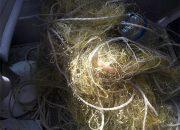 На Кубани из сетей браконьеров выпустили 140 скатов и 80 камбал