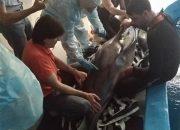 Против владельца дельфинария в Сочи возбудили дело за незаконную добычу афалин