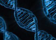 На Кубани мошенница обманула мужчину с тестом ДНК на определение отцовства