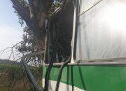 В Абинском районе автобус ПАЗ врезался в дерево, водитель погиб