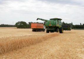 Аграрии Кубани приступили к уборке озимого ячменя