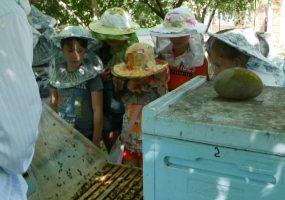 В Кореновском районе школьникам провели экскурсию на пасеку