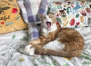 Аллергия на кошек: ученые нашли способ снизить ее
