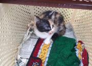 В Новороссийске спасатели вытащили из колодца двух котят