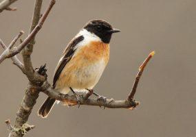 В Кавказском заповеднике орнитологи насчитали более 30 видов птиц