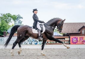 На Кубани стартовали чемпионат и первенство края по конному спорту