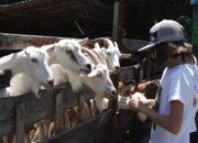 В Армавире для детей открыли агроусадьбу «У бабушки в деревне»