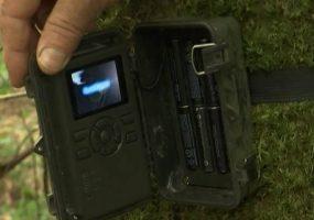 В Сочи расставили фотоловушки для поиска леопарда