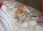 Бизнес с живым реквизитом на побережье: львенок на жаре и обезьяна в транспорте